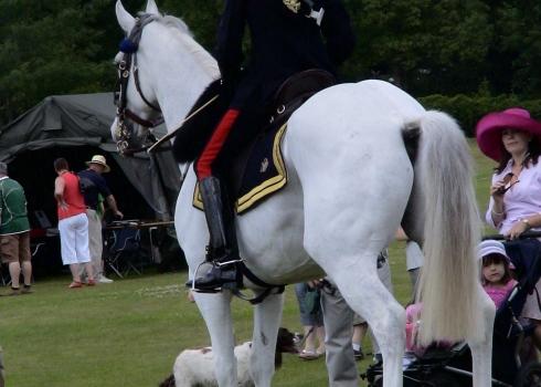 The Adjutant's White Charger (c) Jane Risdon 2011