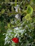 Lavinia's garden, her pride and joy. (c) Jane Risdon 2010