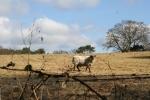 Sheep grazing in the fields (c) Jane Risdon 2012