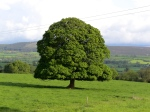 Family Tree research leads to Tipperary. (c) Jane Risdon 2013