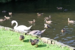 Wildlife at Wellington College lake, 2011