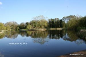 Serenity (c) Jane Risdon 20113