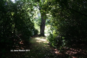 The Lane (c) Jane Risdon 2011