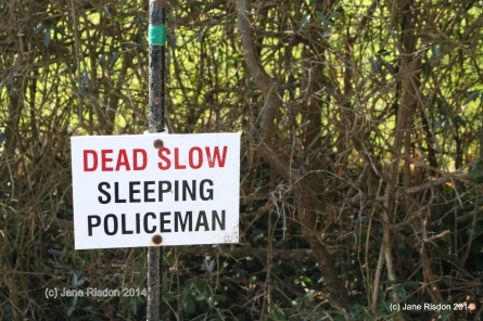 Sleeping Policeman (c) Jane Risdon 2014