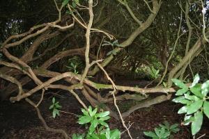 Pinetum (c) JaneRisdon 2014