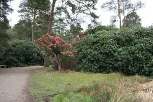 The National Pinetum, Bedgebury (c) Jane Risdon 2014