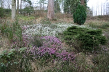 The National Pinetum (c) Jane Risdon 2014