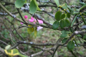 Signs of Spring were starting to show at The National Pinetum (c) Jane Risdon 2014