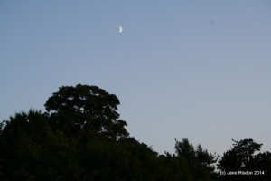 Moon over Audley End House 3rd Aug 2014 (c) Jane Risdon 2014