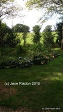 (c) Jane Risdon 2015