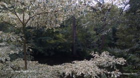 West Green House and Gardens (c) Jane Risdon 2015