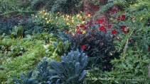 Vegetables and Plants together (c) Jane Risdon 2015