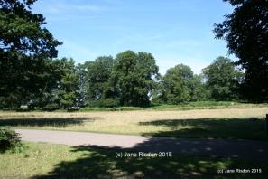 Knole Park (c) Jane Risdon 2015
