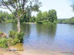 Virginia Waters, Windsor Great Park (c) Jane Risdon 2016