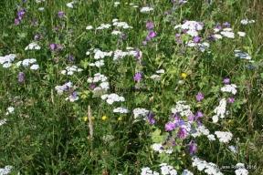 Flowers by the roadside (c) Jane Risdon 2010