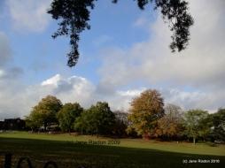 Autumn in a local Park
